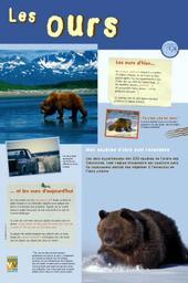 Les ours / Comme vous voulez | Comme vous voulez
