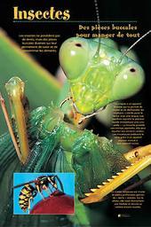 Les insectes / Comme vous voulez | Comme vous voulez